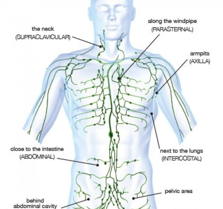 Lymphatic System Drainage