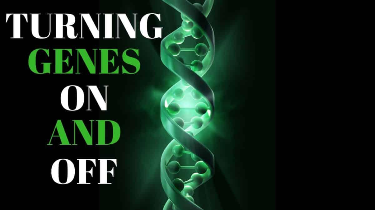 Turning Genes On And Off Through Epigenetics