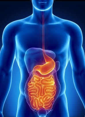 Colon Function In Digestive System