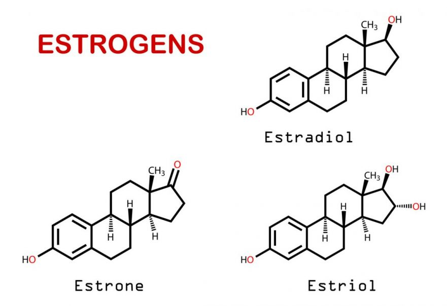 Three Types Of Estrogen And The Cancer Implications Explained
