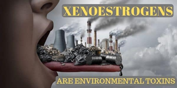 Xenoestrogens And Cancer Connection